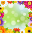 Color Gerbers Flower Frame vector image