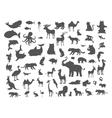 Mammals Birds Fish Reptiles Amphibias Bats Set vector image