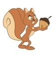 squirrel cartoon icon vector image