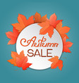 maple leaves autumn sale template for banner vector image