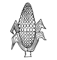 Ear of corn vector image vector image