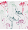 flamingo drawing vector image