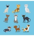 Cartoon domestic cat set vector image