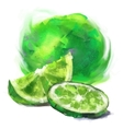 drawing lime with a slice vector image