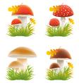 set of mushrooms vector illustrations vector image vector image