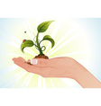 hand with sprout vector image vector image