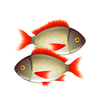 Two fish isolated on white vector image