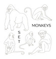 different types of monkeys vector image
