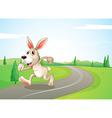 A running rabbit at the road vector image vector image