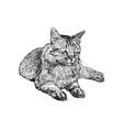 Sitting cat hand draw sketch vector image