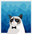 Grumpy Birman cat with black bow tie vector image
