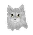 cat baby cute vector image vector image