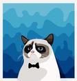 Grumpy Birman cat with black bow tie vector image