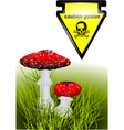 poisonous mushrooms vector image vector image