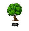 olive tree hand drawn vector image
