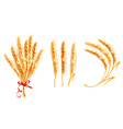 Set of ears of wheat vector image vector image