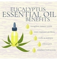 Eucalyptus essential oil benefits infographics vector image