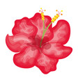tropical flower decorative icon vector image