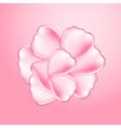 Beautiful pink rose petals vector image