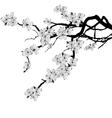 branch of cherry tree vector image