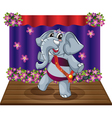 Elephant on stage vector image vector image