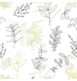 Seamless pattern with hand drawn spicy herbs vector image