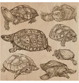 turtles - an hand drawn collection tortoise set vector image