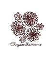 Handsketched bouquet of chrysanthemums vector image