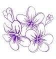 Beautiful Hand Drawn Plumeria Flowers vector image