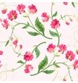 Seamless sweetpea flowers vector image