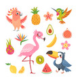 tropical fruit and birds vector image