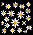 chamomiles on black background vector image