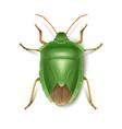 green stink bug vector image