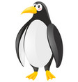 cute penguin on white background vector image