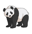color image of a panda isolated object vector image