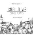 design of hand drawn olives vintage sketch vector image