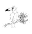 colorless funny cartoon toucan vector image