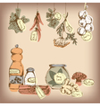 Set of spices and herbs vector image vector image