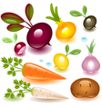 vegetable root vector image vector image