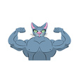Strong cat Power animal bodybuilder Pet with big vector image