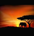 Sunset background with animal elephant vector image
