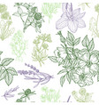seamless pattern medicinal herbs and flowers vector image