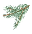 Pine Tree Branches with Cones Christmas Decoration vector image