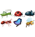 different type of insects vector image vector image