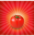 Sunburst Background With Red Tomato vector image vector image
