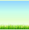 green natural grass border with white daisies vector image