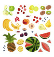 set of colorful cartoon fruit vector image