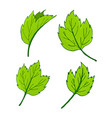 set of elements for decor leaves vector image