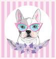 english bulldog isolated on white background cute vector image