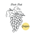 grapes in the old ink style vector image
